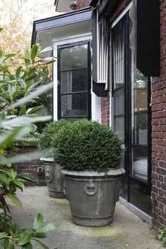 Black Garden, Garden S, Dream Garden, Home And Garden, Outdoor Plants, Potted Plants, Outdoor Gardens, Natural Landscaping, Garden Landscaping
