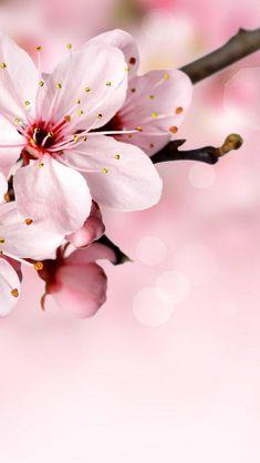 New Flowers Wallpaper Sakura 40 Ideas Trendy Wallpaper, Pink Wallpaper, Flower Wallpaper, Cute Wallpapers, Wallpaper Backgrounds, Iphone Wallpaper, Nature Wallpaper, Pink Petals, Cherry Blossom Tree