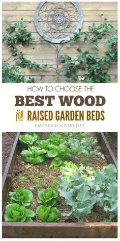 Want to know the best wood for raised garden beds? Raised beds are garden containers made from wood and the type of wood we use will determine how long-lasting, safe, and sustainable they are.