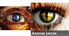 Animal+sense+|+What+magical+power+do+your+eyes+have+story