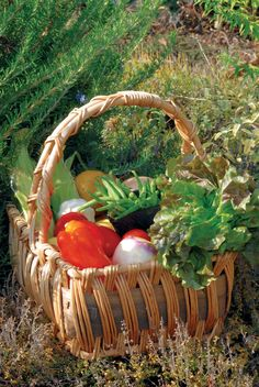 How much do you need to plant to have homegrown food all year round? A Plan for Food Self-Sufficiency - Modern Homesteading - MOTHER EARTH NEWS
