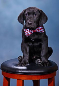 "Even the Frat Hound holds a position in the house. ""Sorority Relations"". TFM. http://www.pinterest.com/SratStylista/"