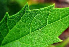 Planta artificial imita fotossíntese e produz eletricidade