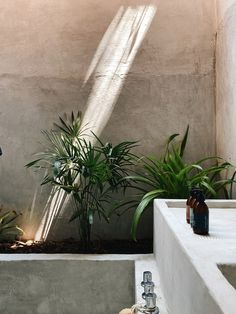 Monte Uzulu is a boutique hotel in the Oaxacan jungle by Taller Lu'um and At-te   Dezeen 17th Century Art, Urban Fabric, Thatched Roof, Conceptual Design, City Architecture, Concrete Wall, Dezeen, Natural Materials, A Boutique
