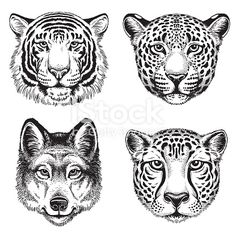 black and white vector line drawings of wild animal faces cheetah - animal face drawing Cheetah Drawing, Cheetah Tattoo, Tiger Drawing, Tigergesicht Tattoo, Head Tattoos, Cheetah Face, Cheetah Animal, Stencil Animal, Tiger Face Tattoo