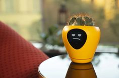 Lua, the sweetest smart planter! Turn your plant into a pet thanks to Lua: the cheerful plant monitor! Available on Indiegogo: igg.me/at/lua Well Images, Grumpy Face, Raining Outside, Virtual Pet, Different Emotions, Simple App, Animation, Plant Needs, Contemporary Ceramics