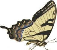 http://images.clipartlogo.com/files/images/42/424230/butterfly-papilio-turnus-side-view-clip-art_t.jpg