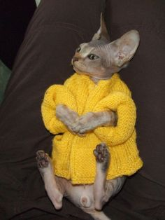 hairless cat with sweater