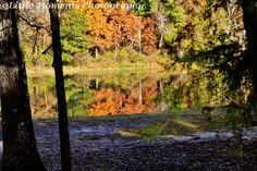 Nature, Fall Colors, Photo, Photography, Ozarks, Nature Photography, digital download, prints , Ozarks, Arkansas area by LittleMomentsPhotos on Etsy