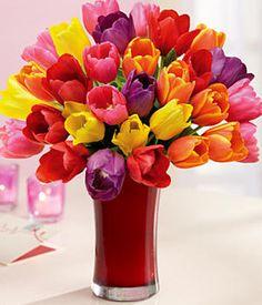 Tulips....spring is just around the corner.