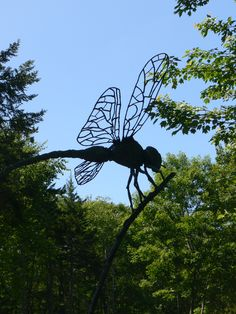 Dragonfly at Coastal Maine Botanical Garden