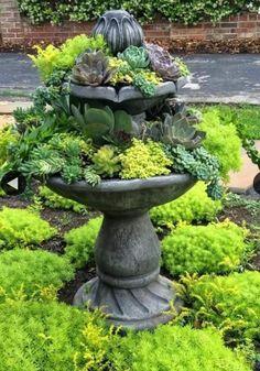 #succulent_fountain #SerraGardens_succulents