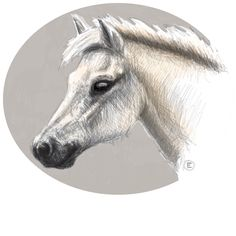 Commissioned Hand-drawn animal Art over to my ETSY SHOP and order one today! FOLLOW me on www.facebook.com/Blueshineart for monthly #sales and #art #specials . #madewithpaper #blueshineart Ipad Art, Pet Portraits, Hand Drawn, Your Pet, How To Draw Hands, Digital Art, My Etsy Shop, Horses, Group