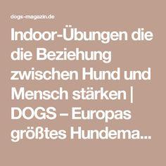 Indoor-Übungen die die Beziehung zwischen Hund und Mensch stärken | DOGS – Europas größtes Hundemagazin