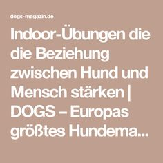 Indoor-Übungen die die Beziehung zwischen Hund und Mensch stärken   DOGS – Europas größtes Hundemagazin