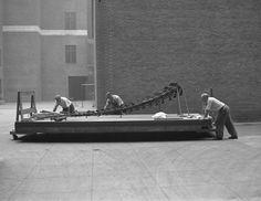 Museum staff moving Brontosaurus skeleton, June 1938