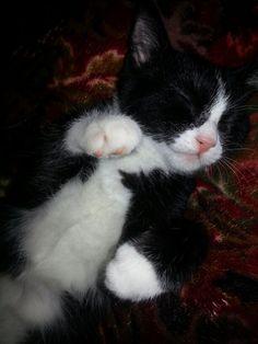 Truly my kitten♡
