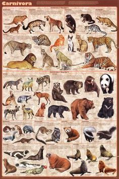 Laminated Carnivores Poster Natural History Educational Print 24 x 36 Carnivorous Animals, Especie Animal, Elephant Seal, Carnivore, Animal Posters, Wildlife Art, Creature Design, Exotic Pets, Animal Drawings