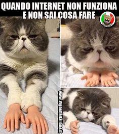 Il gatto passatempo (www.VignetteItaliane.it)