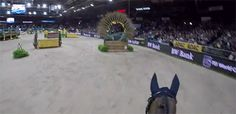 Transperceneige — The Stuttgart German Masters's indoor eventing. Horses Jumping Videos, Horse Videos, Most Beautiful Horses, Pretty Horses, Horse Girl, Horse Love, Horse Animation, Horse Riding Quotes, English Riding
