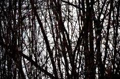 Am Wasser Berg, Landscape, Woodland Forest, Water, Scenery, Corner Landscaping