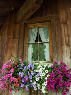 Flowers at the window, Dolomiti, Italy