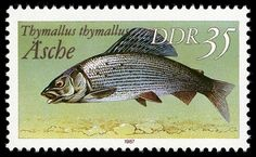 German fish stamp thymallus thymallus German Stamps, Postage Stamp Collection, Fish Tales, Freshwater Fish, Stamp Collecting, Marine Life, Postage Stamps, Fresh Water, Germany