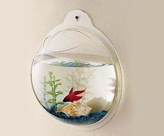Pet #fish bowl with wall mount feature. Looks cute and functional #home #decor item with actual fish inside.
