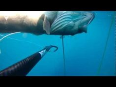 Silent Kill (spearfishing)  By team alchemy (K.Makris & A.Costanasios)