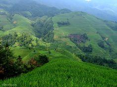 The Longji rice terraces outside of Yangshuo
