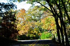 Art, Collectibles, Photography, Color, Fall Colors, Digital Download, Photo, Photography, Arkansas,Devil's Den by LittleMomentsPhotos on Etsy
