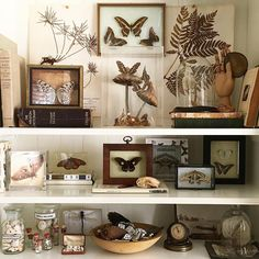 home decor idea Curiosity Cabinet, Interior Exterior, Interior Design, Room Inspiration, Design Inspiration, Cabinet Of Curiosities, Nature Collection, Nature Decor, My Dream Home