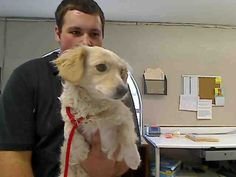 I am a male, tan and white Cocker Spaniel mix.  The shelter staff think I am about 1 year and 7 months old.  I have been at the shelter since Jul 05, 2014.  For more information about this animal, call: Barstow Humane Society at (760) 252-4800 Ask for information about animal ID number A015916