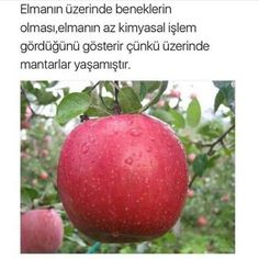 Bilgi Do You Now, Interesting Information, Good To Know, Karma, Life Hacks, Like4like, Apple, Fruit, Words