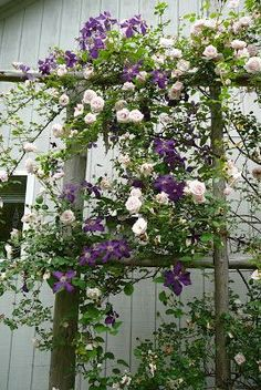 fantastic pairing of Jackmanii clematis and the pale pink New Dawn rose (Diy Garden Projects) Lawn And Garden, Garden Art, Garden Design, Rooftop Garden, Beautiful Gardens, Beautiful Flowers, Rare Flowers, Rosen Beet, Climbing Roses