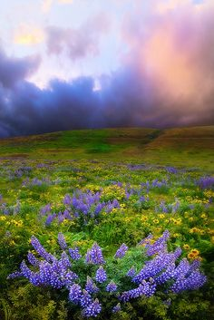 "Can it get more beautiful than this!  THIS IS ""HEAVEN""...... wildflowers"