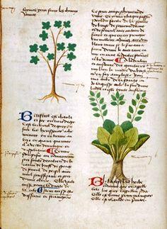 Medieval herbal & cosmetics handouts: http://www.gallowglass.org/jadwiga/herbs/herbs.html
