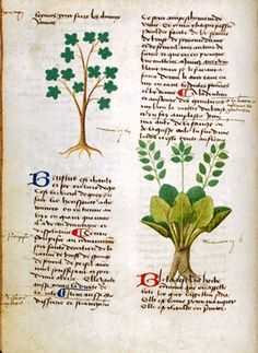 1000 Images About Medieval Herbs On Pinterest Medieval