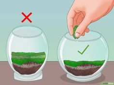 How to Make Moss Terrariums. Moss terrariums are beautiful as decoration, gifts, or housing for small reptiles and amphibians. This article helps you build and maintain a beautiful moss terrarium.