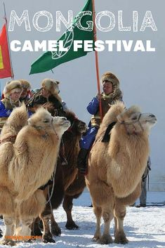 "Camel Festival in Mongolia: The event organizer is the ""Tumen Temee - Ten Thousand Camels"", a local association for protecting and preserving the two humped Bactrian Camel population 