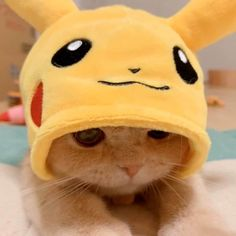 Cat Dressed As Pikachu Is Charming As Heck