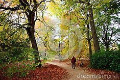 A man and his dog walking in Sheffield Park on a sunny autumn day.