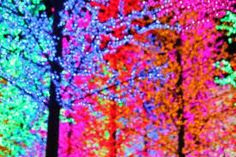 colourful trees - Google Search
