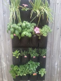 For my herb garden, I use a $7.00 fabric shoe rack.  It hangs on the fence right next to my grill. The fabric keeps the plants moist, but ca...