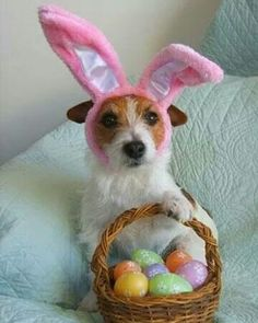 Easter dog bunny!
