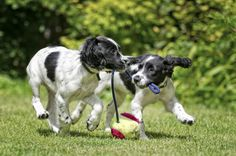 Make sure your dog has a great play-date! Read up on healthy play behaviors between dogs: