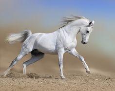 Voor een echte meidenkamer! Fotobehang: Wit Paard - € 11,95 per m2!