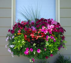 """ I absolutely love these planter boxes. I included wave petunia, burgundy and lime green potato vines, million bells, marigolds and ornamental grasses"" Shannon DeWeese Spokane, WA"