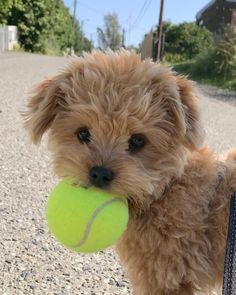 Cute Overload: Internet`s best cute dogs and cute cats are here. Aww pics and adorable animals. So Cute Baby, Baby Animals Super Cute, Super Cute Puppies, Cute Little Puppies, Cute Little Animals, Cute Dogs And Puppies, Cute Funny Animals, Baby Dogs, Cute Babies