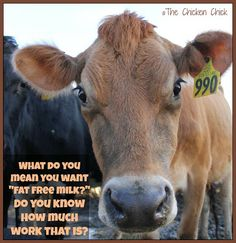 """What do you mean you want """"fat free milk?"""" Do you know how much work that takes?  #cow"""